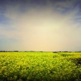 yellow-flower-natarure-photo-wallpaper-2560x1440